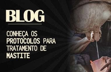 blog mastite