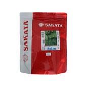 Semente de Rúcula Astro – 500 gramas - Sakata